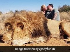 शेर को मारकर खुशी से Kiss करने लगा कपल, फूटा लोगों का गुस्सा, जमकर मचा बवाल