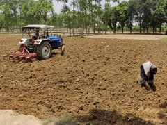 With Deficit In Monsoon, Sowing Of Crucial Crops Takes A Big Hit