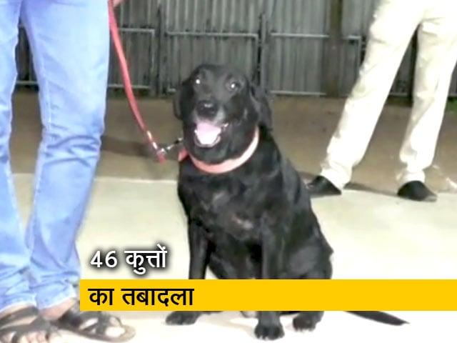 Videos : मध्य प्रदेश: कुत्तों के तबादले पर सियासत
