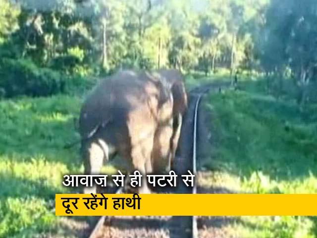 Videos : हाथी बचाएंगी 'मधुमक्खियां', रेलवे ने निकाला है नया तरीका