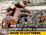 Video: Tree Authority Allows Cutting Of 2700 Trees For Mumbai Metro Car Shed