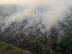 Rain Unlikely To Extinguish Amazon Forest Fires Anytime Soon, Say Experts