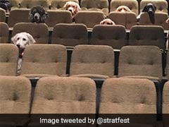 Adorable Pic Of Service Dogs Enjoying Theatre Charms The Internet