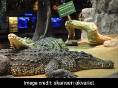 Fidel Castro's Crocodile Attacks Man During Party