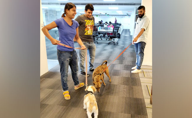 Cats, Dogs And Techies On Office Floor Are Usual Sight At Chennai Startup