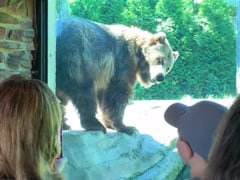 Hilarious Clip Of Grizzly Bear 'Dancing' An Itch Away Delights Internet