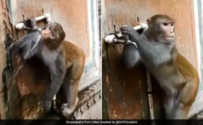 நீரை குடித்துவிட்டு குழாயை மூடி, மனிதர்களுக்கு பாடம் கற்பித்த குரங்கு #ViralVideo
