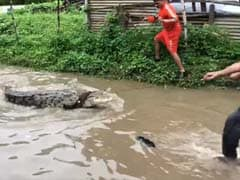 Watch: Chilling Crocodile Rescue From Flooded Street In Gujarat