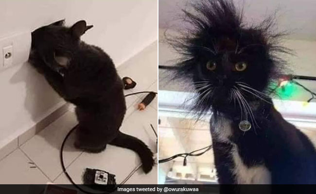 You Should Never Touch Open Switchboards Viral Cat Pics Explain Why