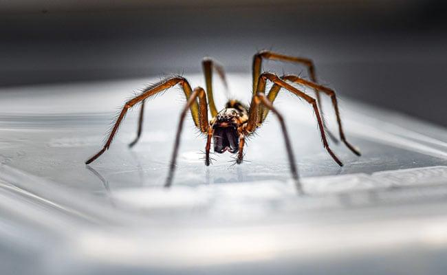 महिला के कान में घुस गई मकड़ी, ऐसे बना लिया अंदर जाला, कमजोर दिल वाले न देखें ये Video