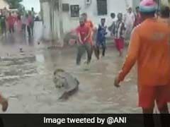 Crocodile Run Over By Vehicle Near Bhuj Airport In Gujarat