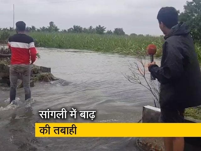 Video : महाराष्ट्र के सांगली में बाढ़ से बुरा हाल, बर्बाद हुई फसलें