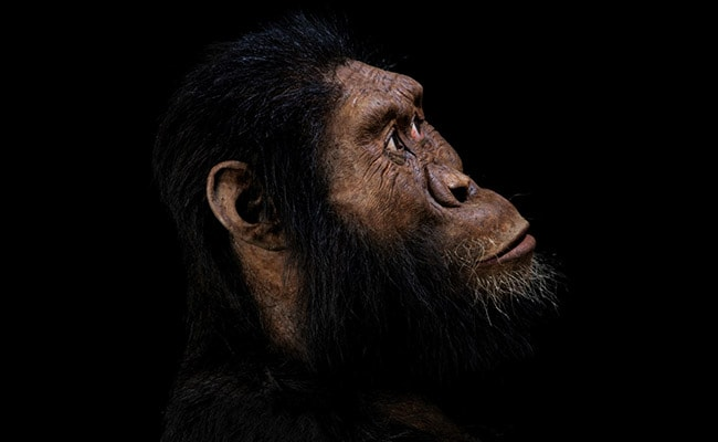 In Landmark Discovery, Skull Of Ancient Human Ancestor Unearthed