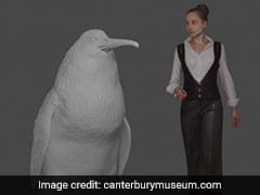 """Human-Sized"" Penguin Fossil Found In New Zealand"
