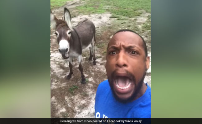 A Man And His Donkey Sing 'Circle Of Life'. Duet Will Leave You In Splits