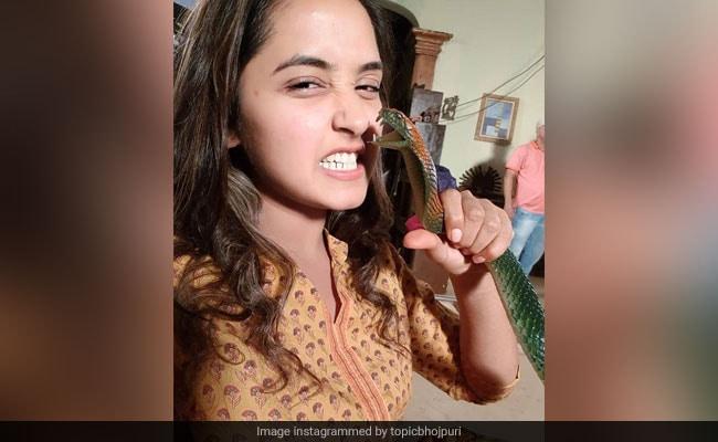Bhojpuri Cinema: भोजपुरी एक्ट्रेस काजल राघवानी ने एक हाथ से पकड़ा सांप और फिर...Photo हुई वायरल