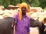 Video : Sponsored Feature: Cow Creches To Revive Chhattisgarh's Rural Economy
