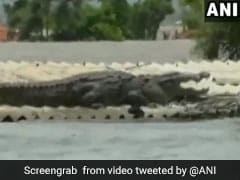 Huge Crocodile Seen On Roof Of Submerged House In Flood-Hit Karnataka