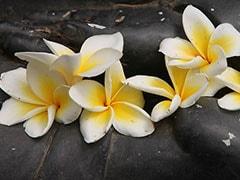 अब गंगा नदी में नहीं बहाए जाएंगे मंदिरों के फूल, बनेगी ये चीज़