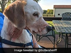 Story Of Abused Dog Was Hoax, US Police Say. Owner Wanted Free Vet Care