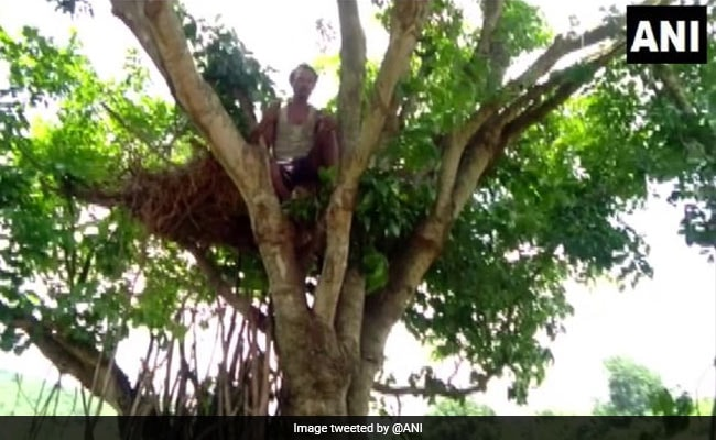 Odisha Man Forced To Live In Tree House After Wild Elephants Destroy