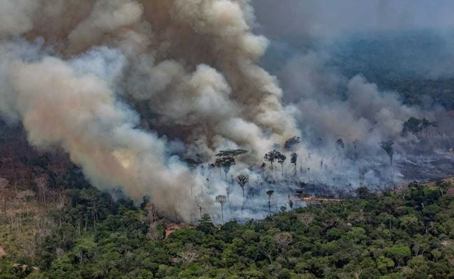 Tropical Rainforest Doesn't Catch Fire, Amazon Is Burning Is A Lie: Brazil President