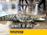Video : गुजरात में बाढ़ के पानी के साथ आ गए मगरमच्छ