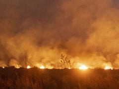 """""""Respond To Call Of Forest"""": G7 To Give $20 Million To Fight Amazon Fires"""