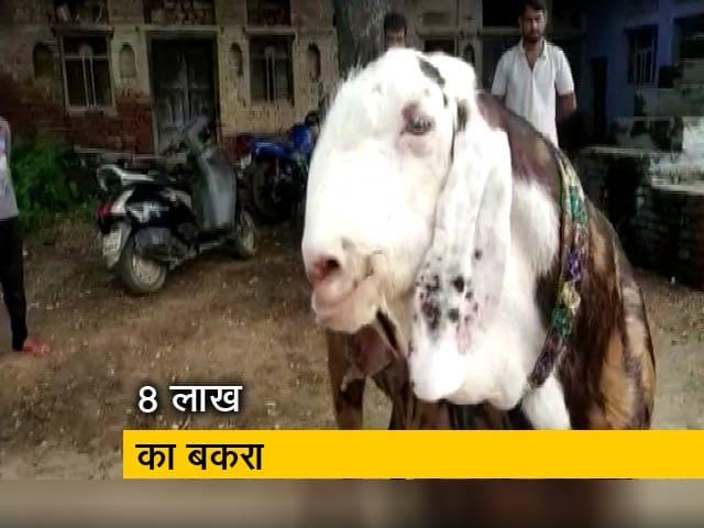 Videos : बकरीद की कुर्बानी के लिए तैयार है 8 लाख का बकरा