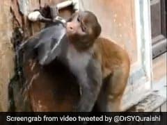 बंदर ने नल खोलकर पिया पानी और फिर किया ऐसा काम... वायरल हुआ VIDEO