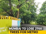 Video : 2,700 Trees In Mumbai To Be Cut For Metro, Activists To Approach Court