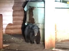 Watch: Bear Cub Tries To Rescue Sibling From Dumpster. Then, Cops Step In