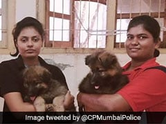 Woman Offered Puppies For Security Duty. Mumbai Police's Sporting Response