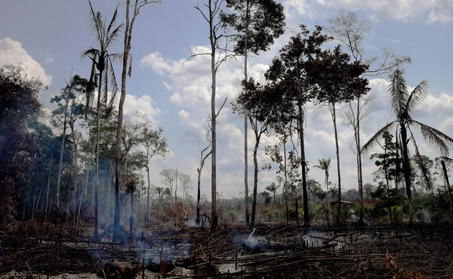 Deforestation In Brazil's Amazon Highest Since 2008: Official