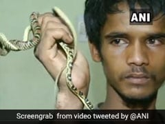 Watch: Rare Flying Snake Seized From Odisha Man
