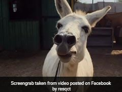 Pune's Singing Donkey Becomes An Internet Sensation. Watch