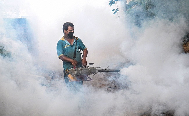 Dengue Vaccination To Be Introduced In India From Next Year: Doctor's Body