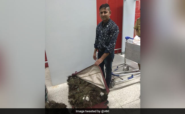Man Arrested With 49 Kilogram Peacock Feather At Delhi Airport