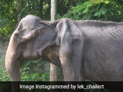 70-Year-Old Frail Elephant In Sri Lanka Whose Photos Sparked Outrage Dies