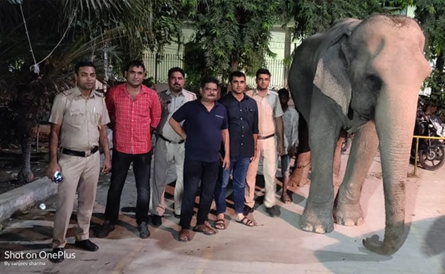 Missing Delhi Elephant, Laxmi, Found After Two Months; Mahout Detained