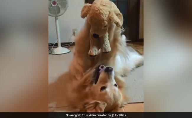 This Viral Video Of A Dog Playing With Her Stuffed Toy Is Pure Joy