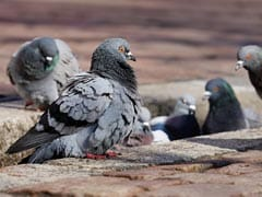 Video: Pigeon Poops On US Lawmaker Complaining About Pigeon Poop