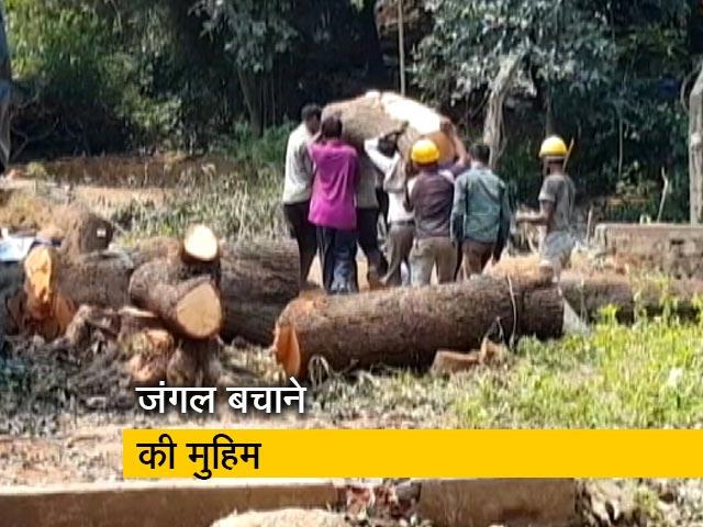 Videos : मुंबई में आरे के जंगल बचाने के लिए बियर ग्रिल्स से लगाई गुहार