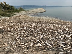 Thousands Of Dead Fish Wash Up On Drought-Stricken Greek Lake