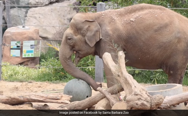 Indian Elephant 'Little Mac' Euthanised In California Zoo