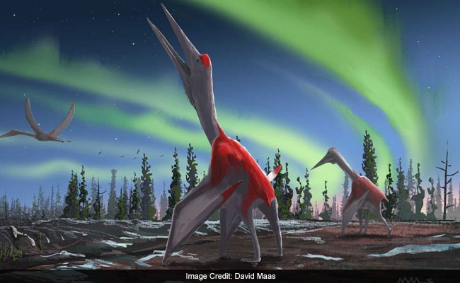 'Frozen Dragon Of North Wind' Among Largest Flying Animals: Scientists
