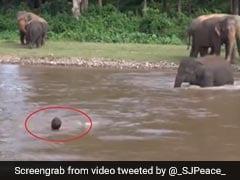 नदी में शख्स को 'डूबता' देख पानी में उतर गया हाथी का बच्चा, किया ऐसा... देखें Viral Video