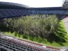 Why A Football Stadium Was Turned Into A Forest