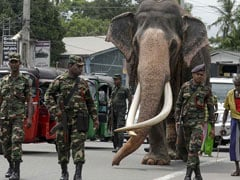 This Elephant Has 24X7 Security Escort When He Moves