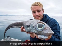"""Dinosaur-Like"" Fish With Bulging Eyes Caught In Norway. Pic Is Viral"
